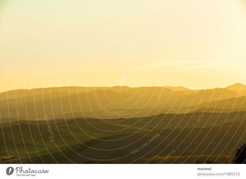 Hilly landscape of Tuscany before sunrise Vacation & Travel Landscape Sky Cloudless sky Sunrise Sunset Spring Tree Field Yellow Gold Green Horizon Idyll Italy