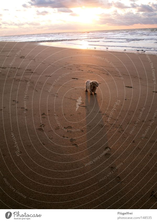 Dog Sky Sun Ocean Loneliness Beach Clouds Warmth Autumn Movement Freedom Sand Lighting Glittering Wait
