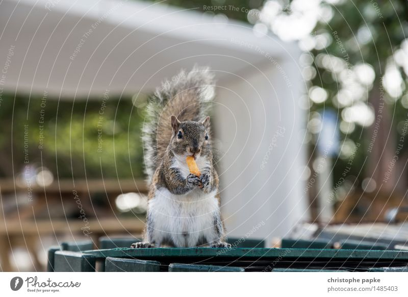 yummie USA Florida Animal Wild animal Animal face Pelt Claw Paw Squirrel 1 To hold on To feed Stand Friendliness Curiosity Cute Contentment Bushy