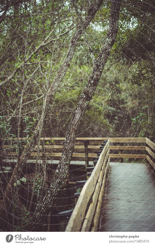 Nature Vacation & Travel Plant Tree Forest Natural Park Tourism Wild Wet USA Virgin forest Florida