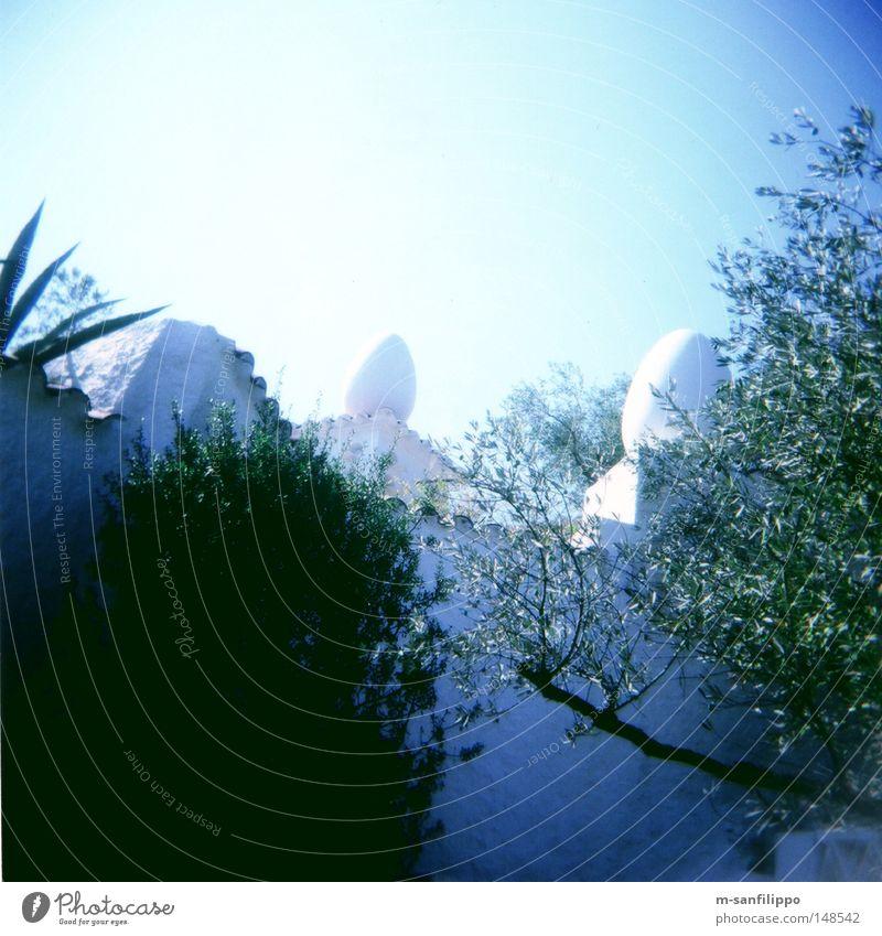 Sky White Sun Blue Summer Garden Wall (barrier) Art Architecture Square Brick Egg Spain Terrace Horticulture
