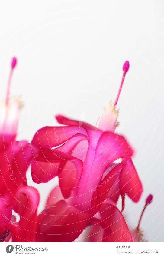 Nature Plant Colour White Flower Life Blossom Emotions Bright Pink Design Growth Esthetic Beginning Blossoming Joie de vivre (Vitality)