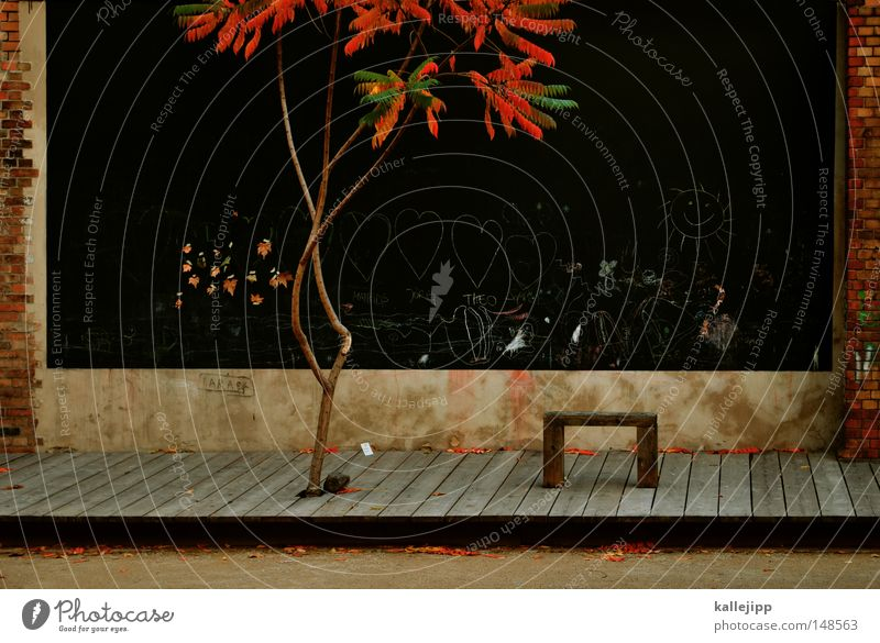 Tree Plant Black Autumn Garden Wood Stone Park Landscape Bench Infancy Brick Painting and drawing (object) Hallway Seating Drawing