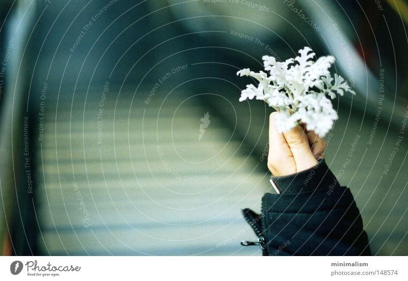 welcome, winter. Flower Plant Winter Depth of field Underground Stairs Jacket Cold Autumn Joy Hand Arm
