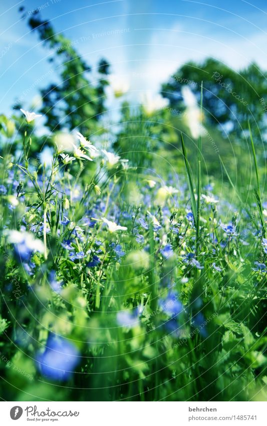 be a beetle Nature Plant Sky Summer Beautiful weather Flower Grass Leaf Blossom Wild plant Veronica Garden Park Meadow Blossoming Fragrance Relaxation Hiking