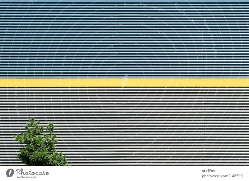 Nature Tree Yellow Wall (building) Line Architecture Industry Modern Warehouse Hall Illogical Disagreement