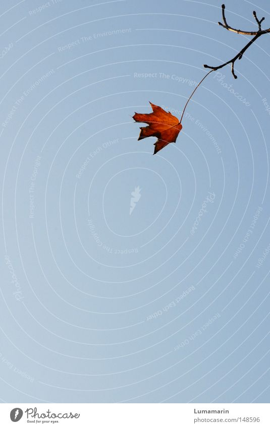 Sky Leaf Loneliness Relaxation Autumn Power Wait Force Branch Transience Uniqueness Strong Connection Seasons Dry Twig