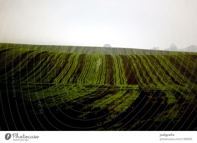 Green Colour Autumn Line Brown Waves Field Earth Fog Ground Hill Agriculture Harvest Haze Sowing