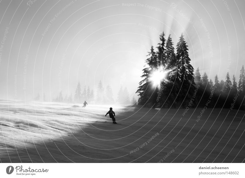 Winter sports Christmas card Skiing Ski run Snow Black Forest White Deep snow Leisure and hobbies Vacation & Travel Background picture Tree Snowscape Nature Sky