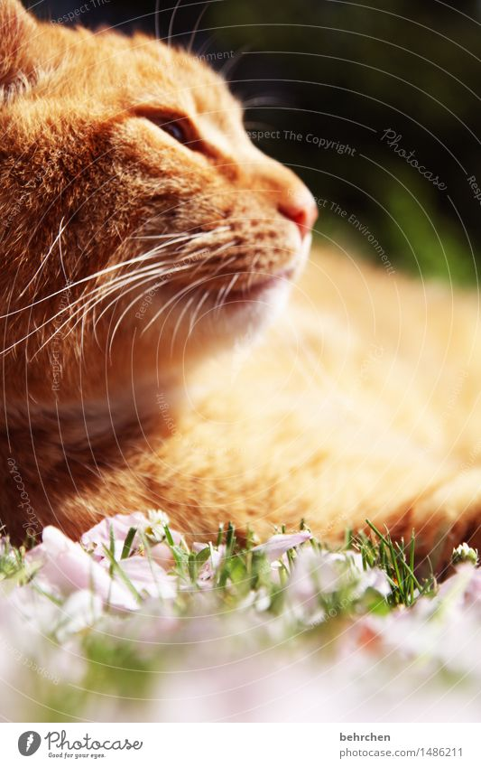 Cat Nature Plant Beautiful Summer Relaxation Animal Blossom Spring Meadow Grass Garden Orange Dream Park To enjoy