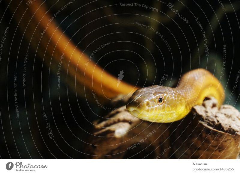 Animal Dark Wild animal Gold Esthetic Observe Animal face Beige Snake