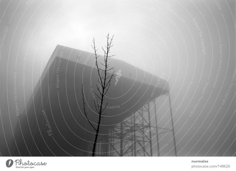 Tree Loneliness Winter Cold Mountain Architecture Autumn Gray Art Flying Metal Leisure and hobbies Fog Fresh Energy Tall