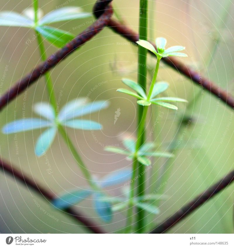 Nature Old Flower Green Blue Plant Yellow Autumn Growth Floor covering Rust Seasons Fence Barrier Autumnal