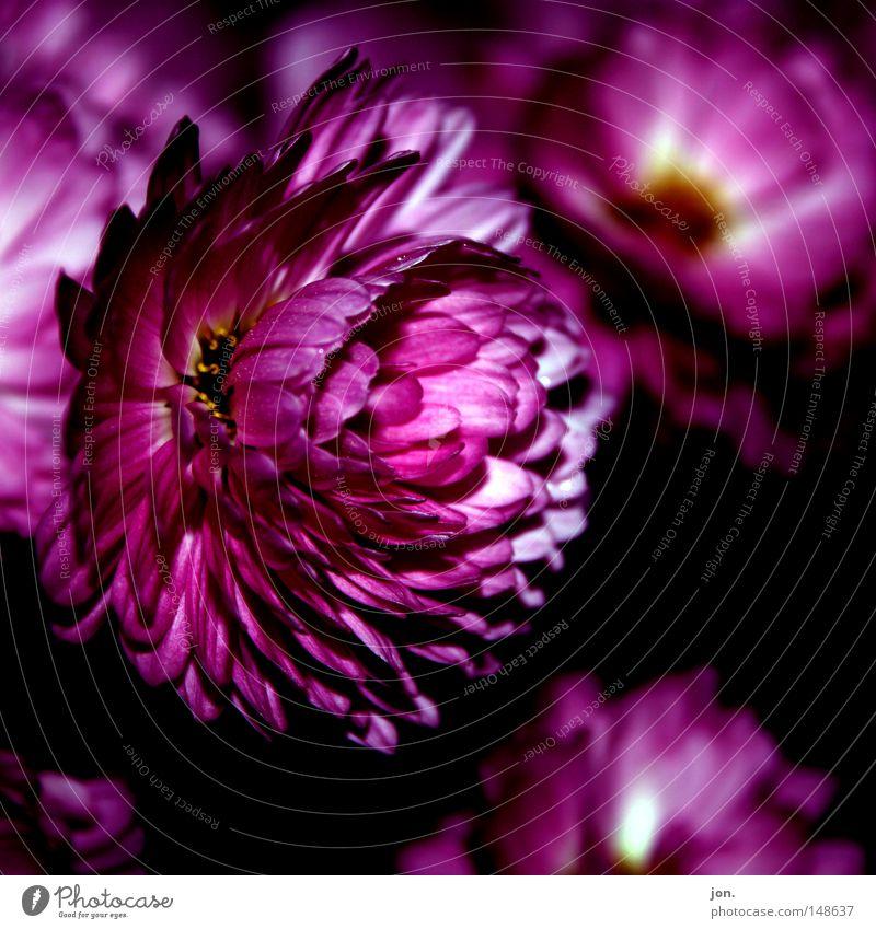 Flower Red Summer Calm Dark Autumn Spring Pink Square November