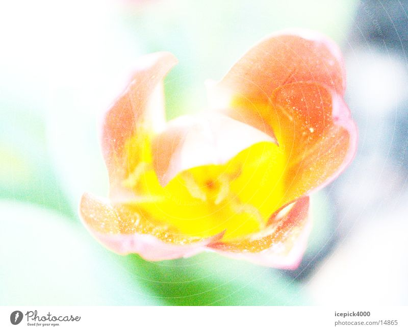 Blossom Crazy