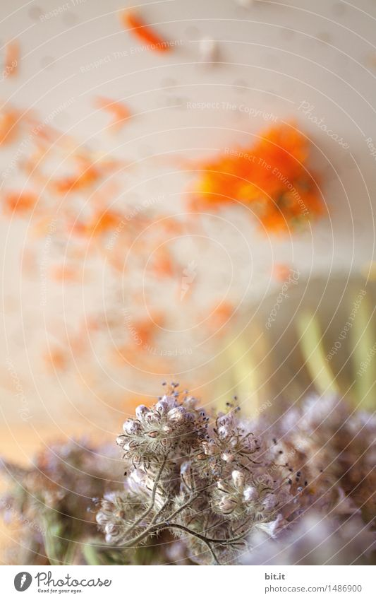 bouquet Plant Flower Blossom Faded To dry up Bouquet Flower vase Dried flower Colour photo