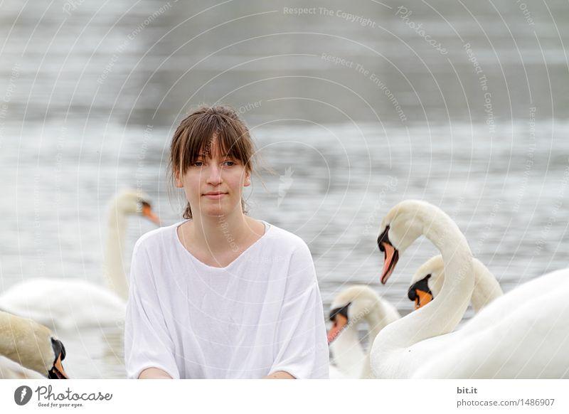 Under swans Vacation & Travel Trip Adventure Joy luck Joie de vivre (Vitality) Swan Nature Fairy tale Colour photo Exterior shot Copy Space top Day