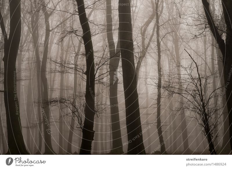 Logs in the fog Environment Nature Landscape Plant Autumn Winter Fog Tree Bushes Forest Threat Dark Creepy Cold Brown Gray Emotions Moody Sadness Grief Fear