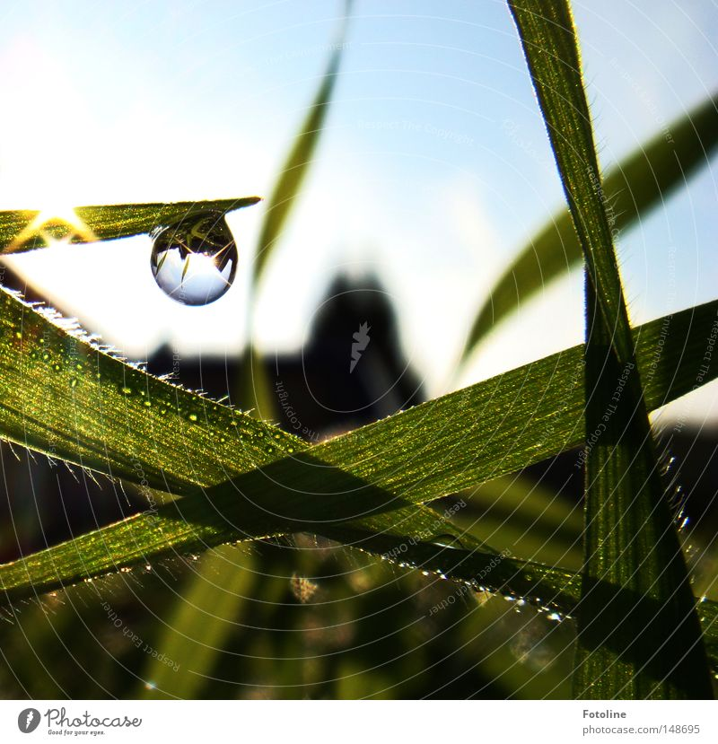 Sky White Sun Green Blue Summer House (Residential Structure) Clouds Autumn Meadow Grass Spring Lighting Glittering Drops of water Drop