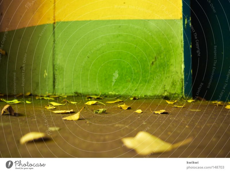 Green Blue Yellow Autumn Wall (building) Wall (barrier) Line Ground Lie To fall Autumn leaves Gaudy