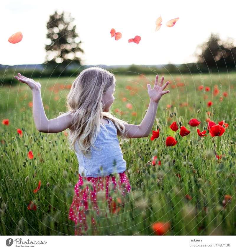 Summer in the heart Human being Feminine Androgynous Child Girl Infancy 1 3 - 8 years Nature Sunlight Beautiful weather Plant Flower Poppy Poppy field Field