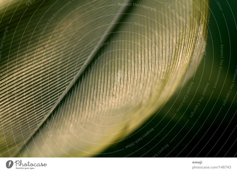 Green Line Feather Near Cloth Material