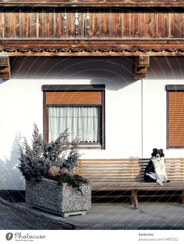 watchdog Tourism Plant Foliage plant House (Residential Structure) Detached house Facade Balcony Window Animal Pet Dog 1 Observe To enjoy Sit Funny Brown Gray