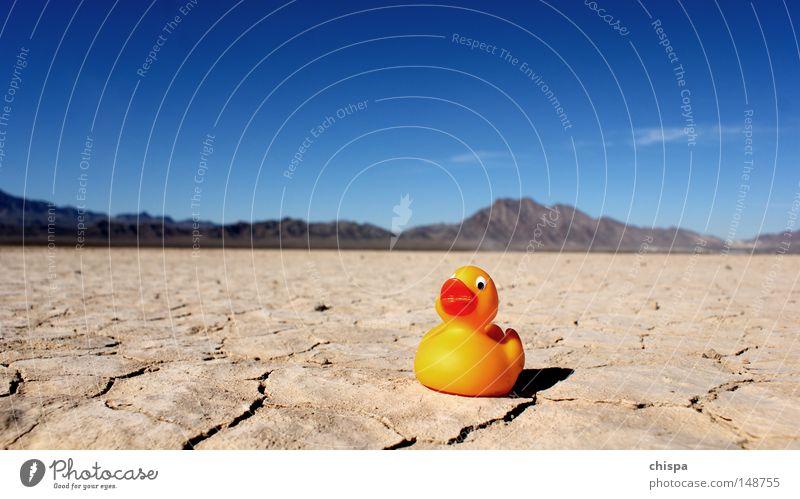 Desert Duck Squeak duck Salt  lake Lake Sand Dry Sky USA Americas Bird Entertainment