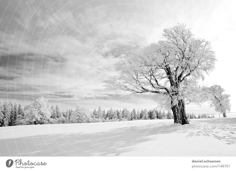 Sky Nature Vacation & Travel White Sun Tree Loneliness Winter Cold Mountain Snow Background picture Germany Horizon Leisure and hobbies Weather