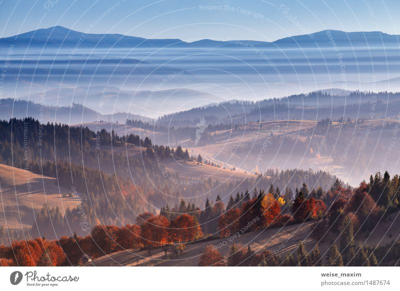 Morning mist in mountains. Autumn sunrise over the hills Beautiful Vacation & Travel Mountain Environment Nature Landscape Plant Sky Beautiful weather Fog