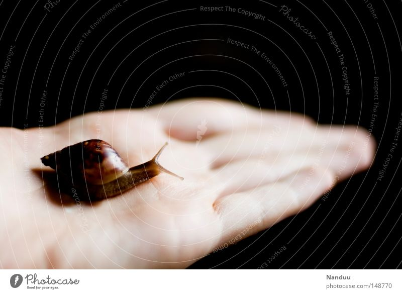 fragile Snail Small Animal Slimy Vulnerable Slowly To hold on Hand Protection Carrying Crawl Shell-bearing mollusk Fragile Sensitive Fish Moral agate snail