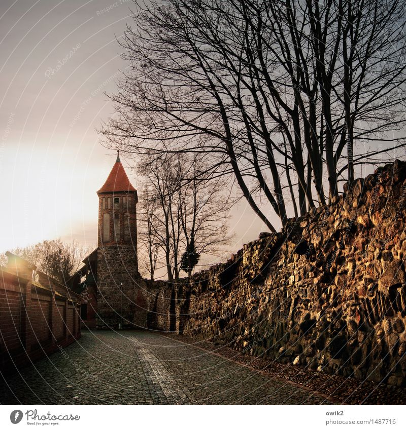 Old Tree Wall (building) Building Wall (barrier) Germany Glittering Illuminate Tall Simple Tower Historic Past Manmade structures Firm Cloudless sky