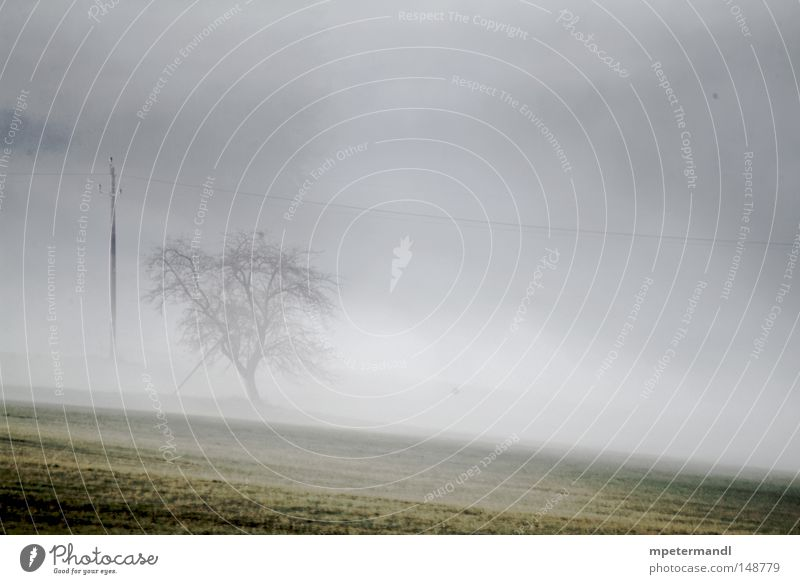 tree in the mist Tree Blur Silhouette Plant Fruit trees Europe Austria Field Agriculture Meadow Brown Autumn Wet Fog eidenberg Sadness
