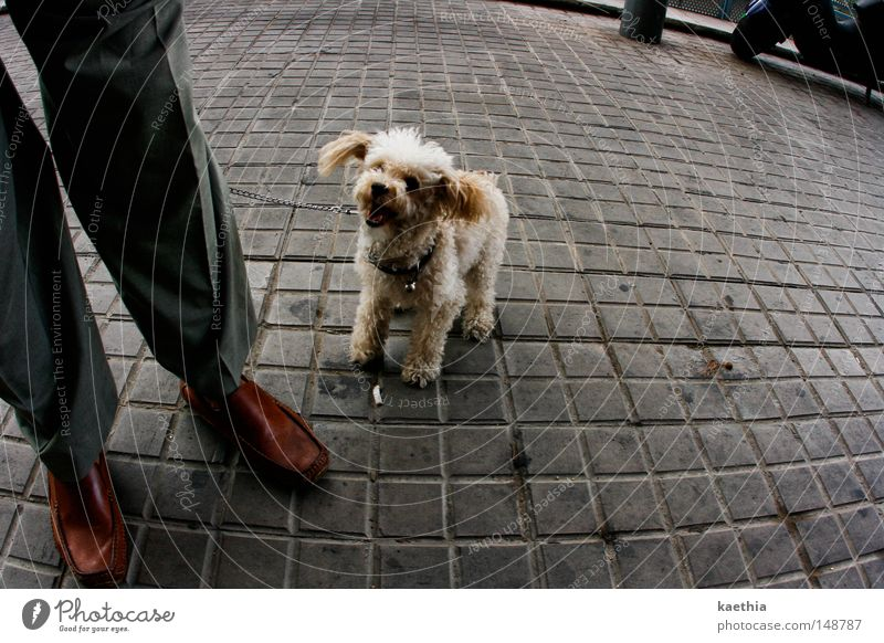 Smile, please! Street Dog Laughter Obedient Poodle Plush Mammal Man Legs Feet Joy Grinning Paving stone Town Stone Square Footwear Leather Pet Small Fisheye