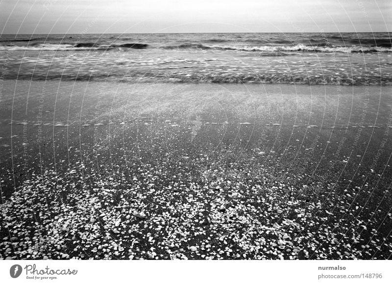 Hearing the noise Ocean Beach Baltic Sea Waves Water Salt Cooking salt Sea water Wind Lime High tide Torrents of water Sand Wet Sense of taste Horizon Usedom