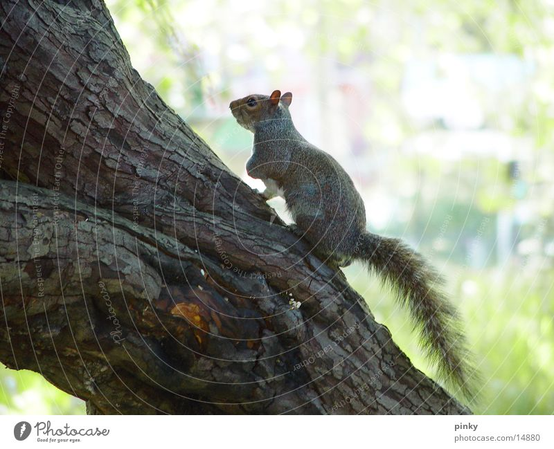 squirrel Tree Squirrel Hazelnut small tree-climbing animal with a bushy tail and a big brain cute Zoo cautious bite Nature sabine