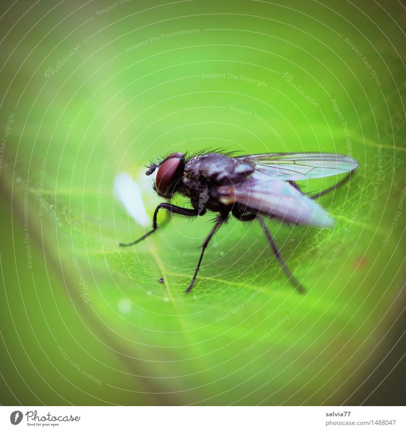 Last drop Nature Plant Animal Leaf Wild animal Fly Wing Insect Compound eye 1 Observe Crawl Sit Small Green Ease Drop Colour photo Exterior shot Detail