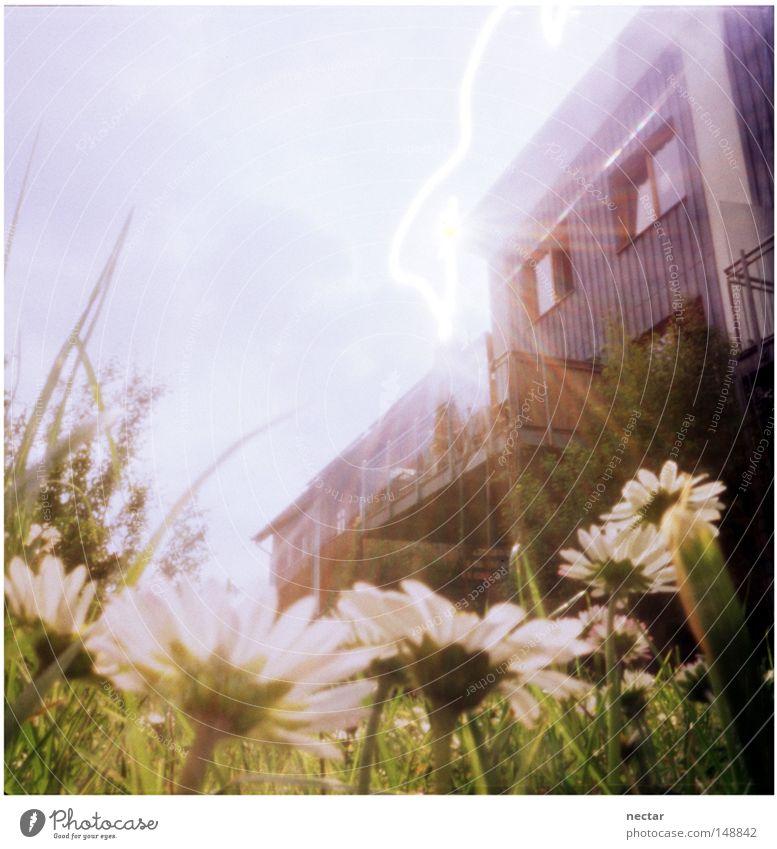 Sky Sun Flower Summer Calm House (Residential Structure) Meadow Window Grass Garden Lighting Architecture Success Peace Under