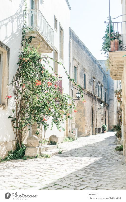 In the light Summer Beautiful weather Flower Bushes Italy Apulia Small Town Downtown Old town Deserted House (Residential Structure) Detached house