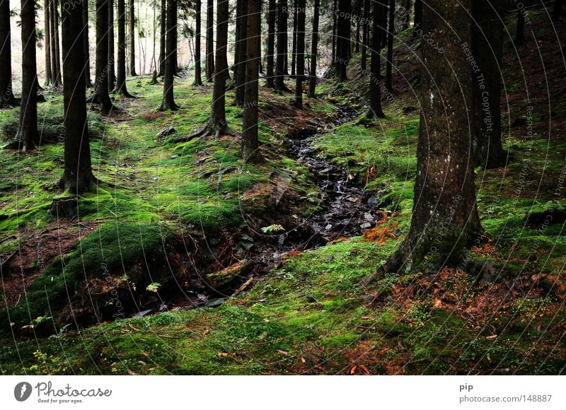 Nature Tree Loneliness Forest Dark Natural Wet Authentic River Fantastic Fairy tale Mushroom Creepy Fir tree Tree trunk Damp