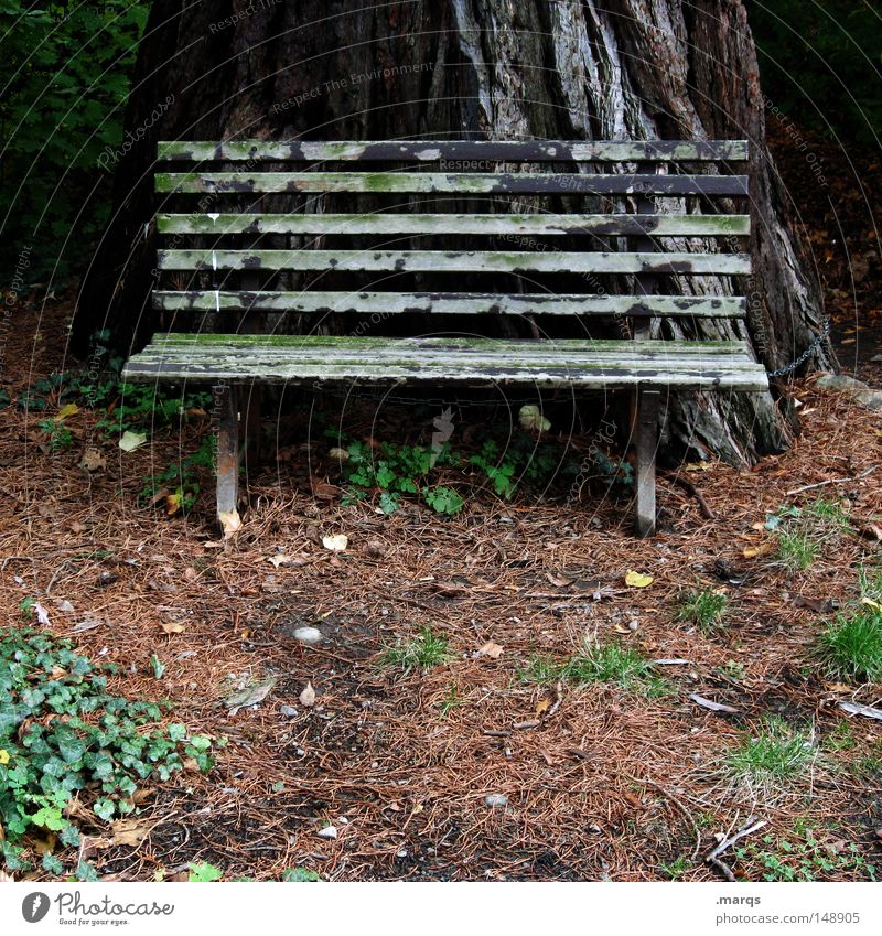 Nature Old Forest Relaxation Autumn Wood Park Brown Safety Tourism Break Bench Protection Trust Derelict Economy