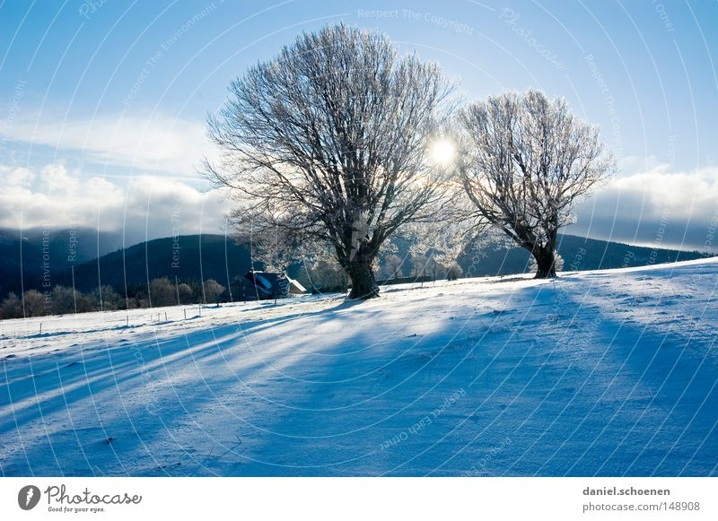 Sky Nature Vacation & Travel Blue White Tree Loneliness Winter Cold Mountain Snow Background picture Germany Horizon Leisure and hobbies Weather