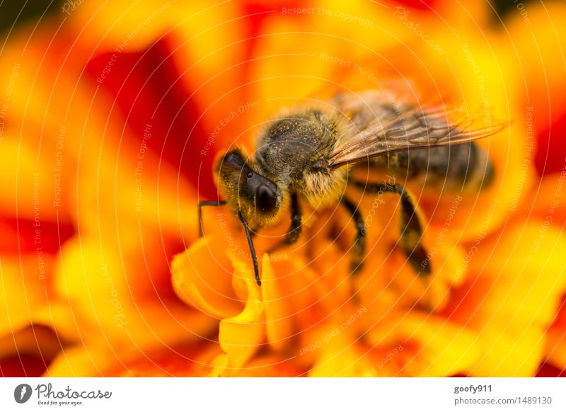 bee Environment Nature Landscape Spring Summer Beautiful weather Plant Flower Blossom Foliage plant Garden Park Meadow Animal Farm animal Wild animal Bee