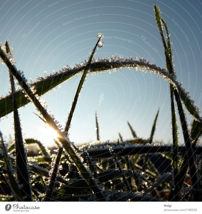 frozen... Autumn Winter Ice Frost Cold Ice crystal Freeze Hoar frost Frozen Morning Sunrise Beautiful weather Grass Meadow Blade of grass Glittering Glimmer