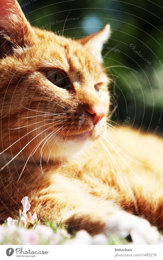 Cat Nature Plant Summer Beautiful Relaxation Animal Spring Eyes Meadow Grass Garden Park Lie Observe Nose