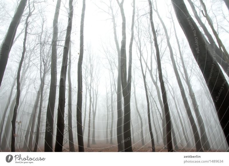 high forest Forest Tall Hunting Blind Beech tree Beech wood Nature Landscape Tree Tree trunk Branch Twig Winter Autumn Fog Haze Copy Space Deserted Heaven