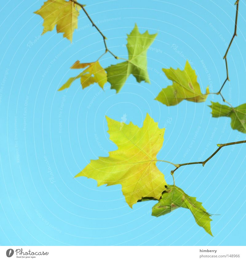 leaf-matt Leaf Summer Spring Autumn leaves Tree Yellow Green Nature Transience Structures and shapes Background picture Sky Kitsch Colour