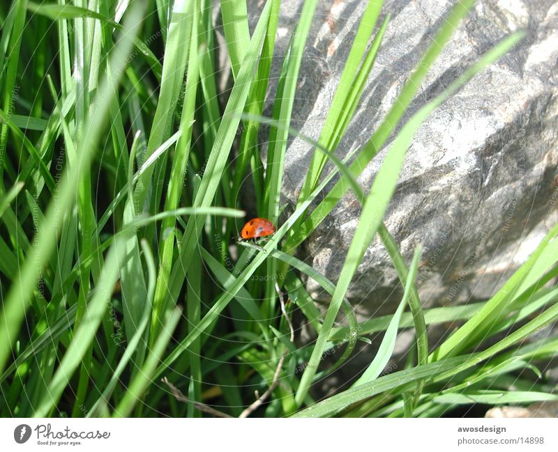 Nature Green Red Grass Insect Point Ladybird Beetle
