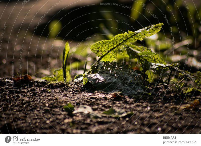 fourteen Woodground Summer Nature Green Leaf Wake up Growth Small