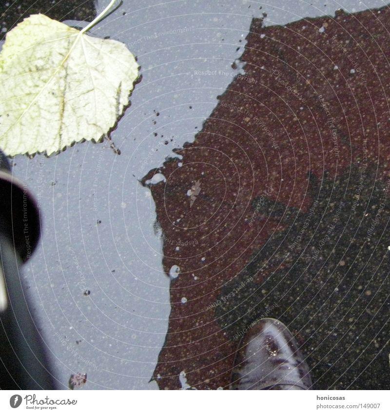 When it rains Wet Leaf Umbrella Rain Footwear Boots Reflection Mirror image Soak Autumn Street